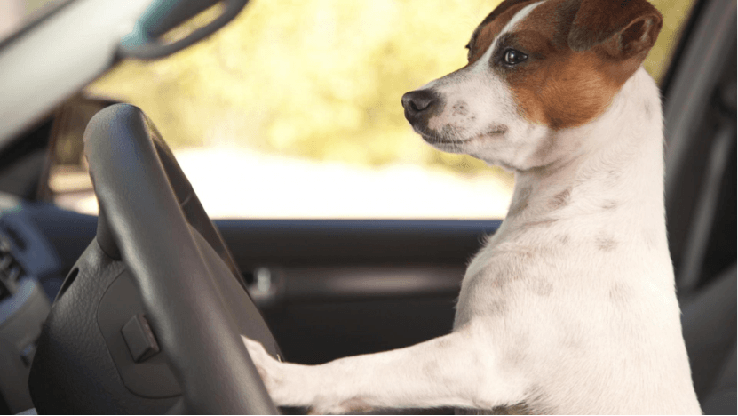 Driver Dog | Honest-1 Clarksville